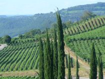 Vineyards in south of Brazil, near Bento Goncalves